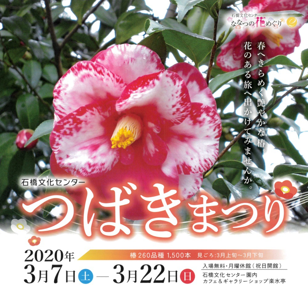 石橋文化センター つばきまつり2020 園内に咲く260種1,500本の椿