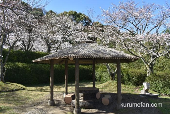 発心公園 約170本の桜 全体的に5~6分咲き