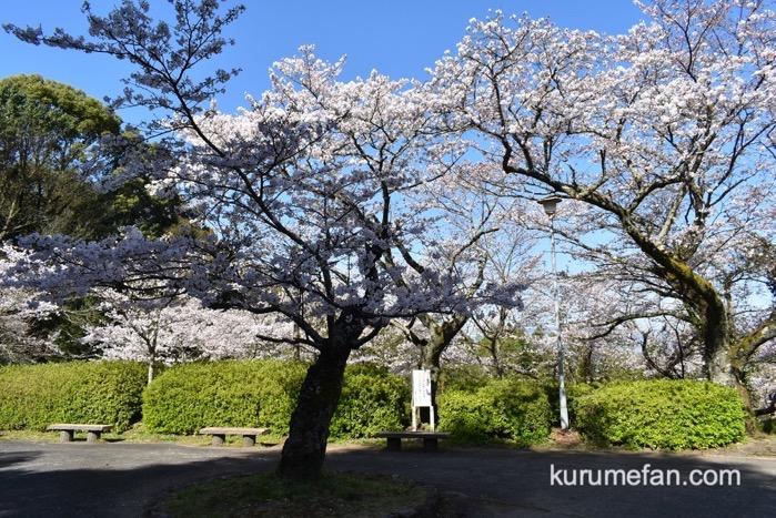 久留米市 発心公園 約170本の桜