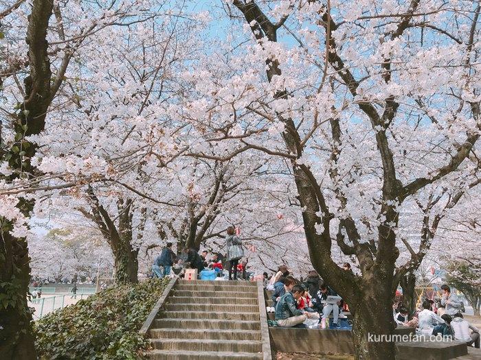 久留米市 花見の時期の公園での飲食を伴う宴会等の自粛を呼びかけ