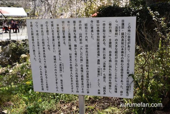 うきは市 法華原華庭園「身延桜」の歴史