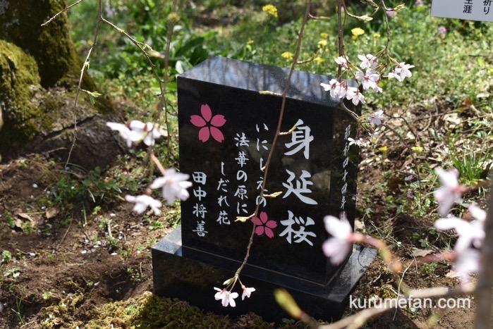 うきは市「身延桜」田中将善の石碑
