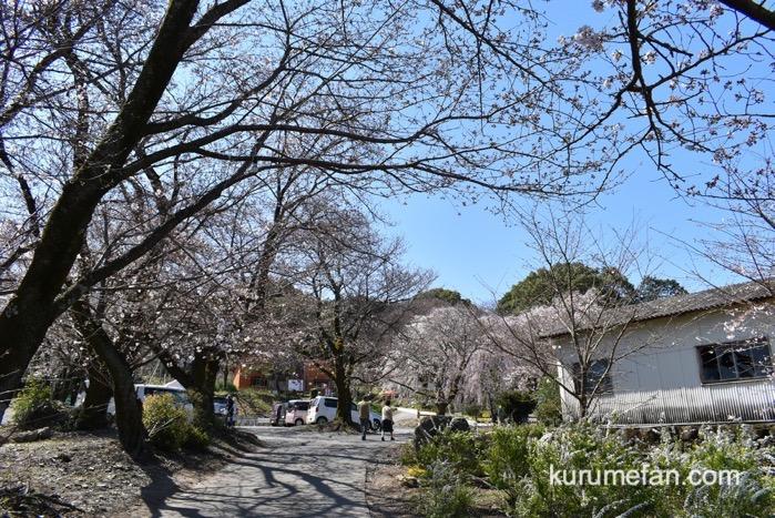 駐車場から見延桜まで歩き