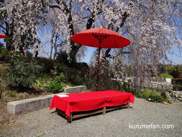 うきは市 法華原華庭園「身延桜」撮影スポット