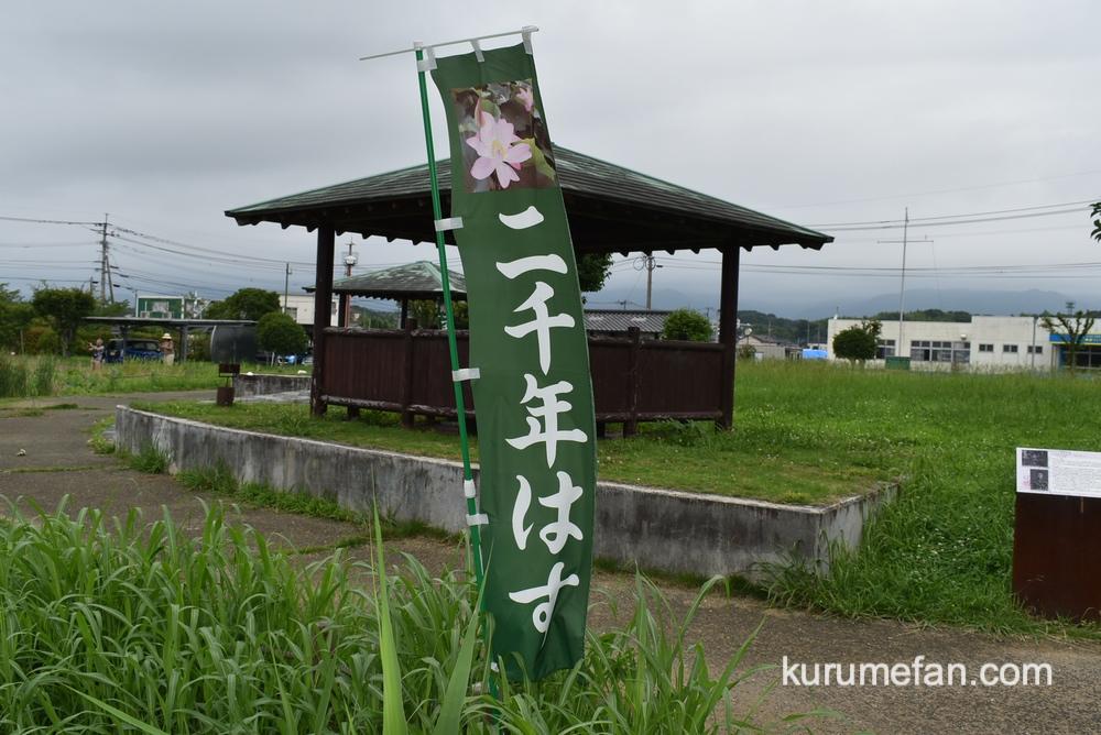 Miyakimachi chirikudoipark hasu 0001