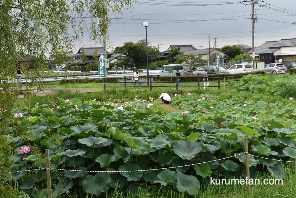 Miyakimachi chirikudoipark hasu 0003