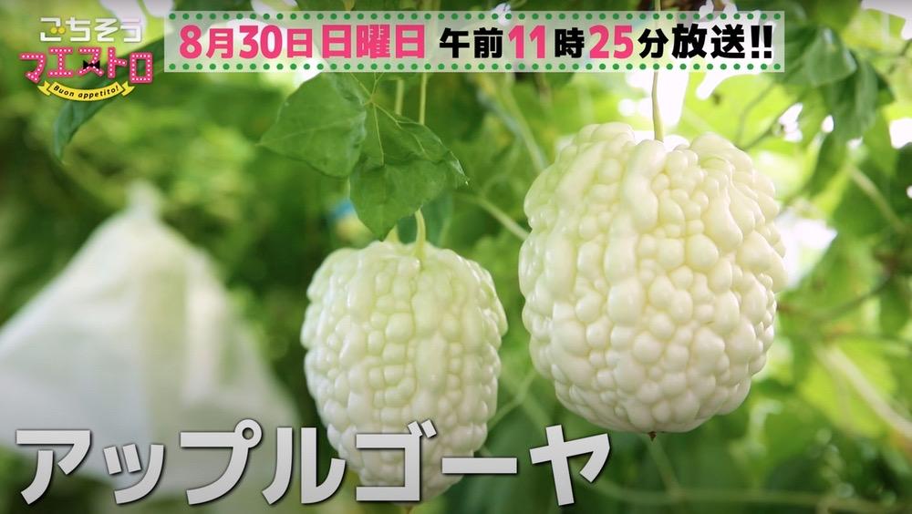ごちそうマエストロ 八女市へ 夏野菜の代表格「ゴーヤ」8月30日放送