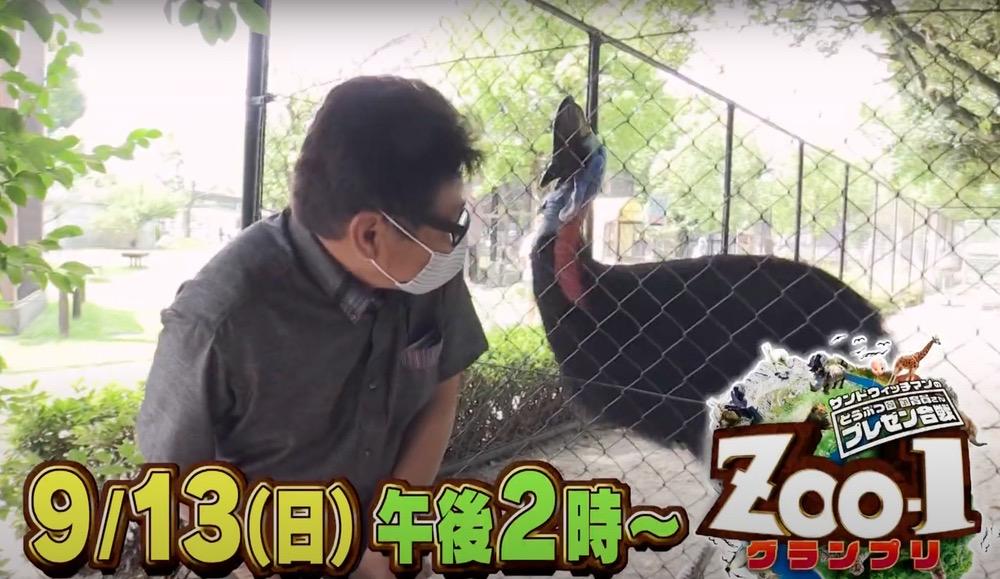 サンドウィッチマン zoo-1グランプリ 久留米市鳥類センターのヒクイドリが登場