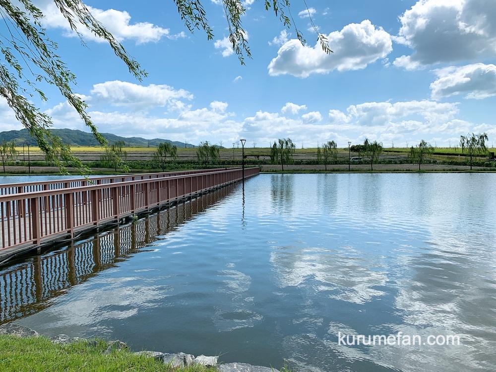 筑後市 筑後広域公園「秋のひまわり」の場所 フラワーゾーン 湿地園の橋