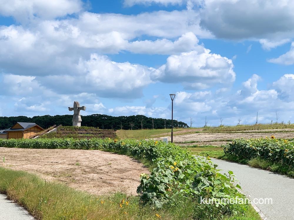 筑後市 筑後広域公園「秋のひまわり」の場所 フラワーゾーン 沿路に沿って植えられたヒマワリ