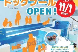 九州初!屋内型温水ドッグプールがオープン!ワンワン広場カムカム