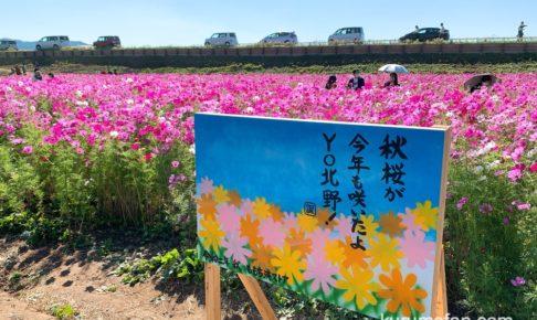 夢・クルーズ 久留米市北野町「コスモス街道」10月29日放送