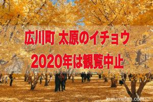 広川町「太原のイチョウ」2020年は観覧中止 新型コロナの影響やイチョウ養生のため