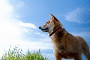 吉野ヶ里ドッグフェスタ 「犬吉猫吉」撮影会やお散歩ウォッチング開催