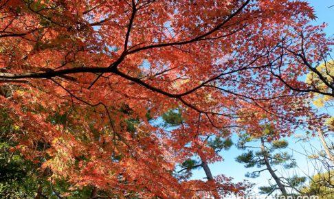 石橋文化センターの紅葉がきれい!園内の紅葉や白鳥を見てきた【久留米市】