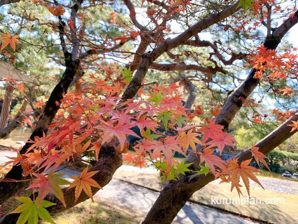 石橋文化センター園内の美しい紅葉【久留米市野中町】