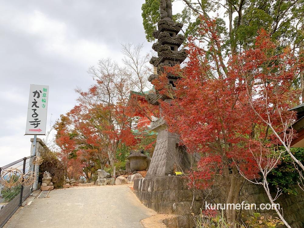 小郡市 かえる寺(如意輪寺)の紅葉2020年