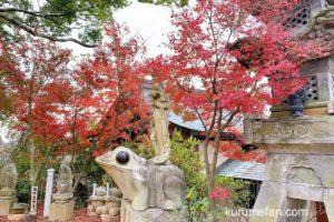 かえる寺(如意輪寺)の紅葉を見てきた 境内の美しい紅葉【小郡市】