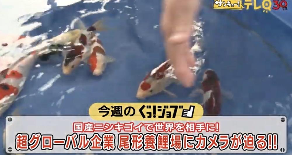 ぐっ!ジョブ 久留米市の尾形養鯉場!動く宝石「ニシキゴイ」で世界に挑む!!