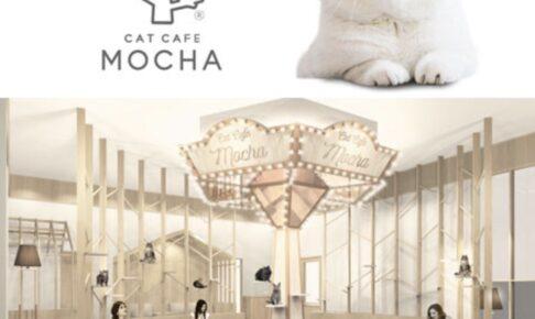 猫カフェ MOCHA(モカ)イオンモール筑紫野店 2/26オープン