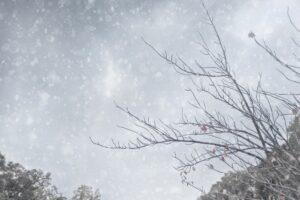 久留米市に大雪注意報、風雪・雷注意報 朝から雪がちらつく【2月17日】