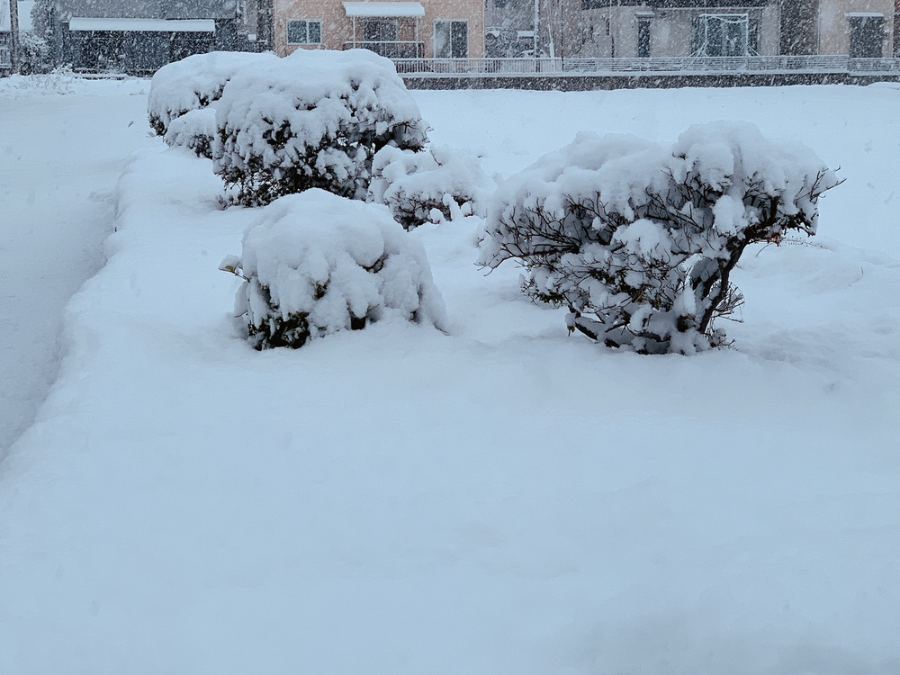 久留米市 雪が積もる 一帯、雪景色(2021年2月18日)