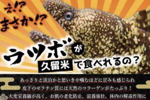 海鮮居酒屋 夢邸 久留米でウツボ料理を食べれる!4月1日よりスタート!!