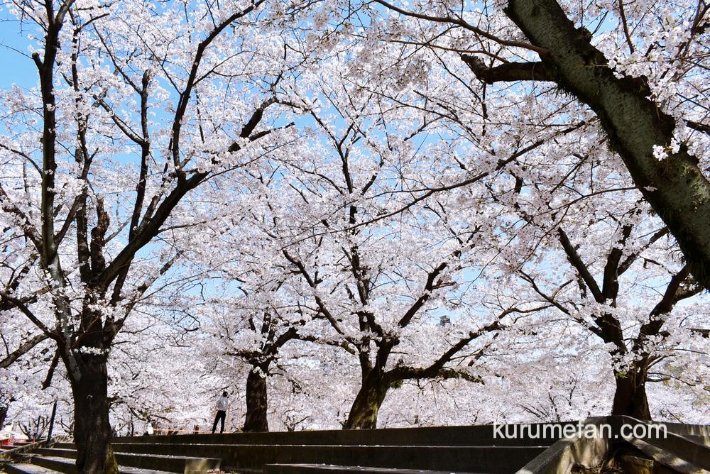 久留米市 小頭町公園の桜が見頃!満開の桜が綺麗!街なかで桜を楽しめるスポット
