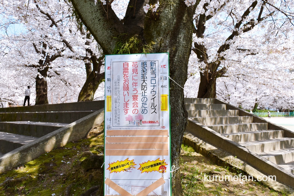 久留米市 小頭町公園 新型コロナウイルス感染拡大防止のため、花見を伴う宴会の自粛をお願いの看板