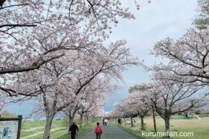 久留米百年公園と中千出公園の桜が満開!桜並木が綺麗【2021年】