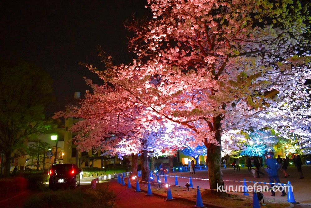 久留米市 三本松公園 車内からもライトアップが楽しめる