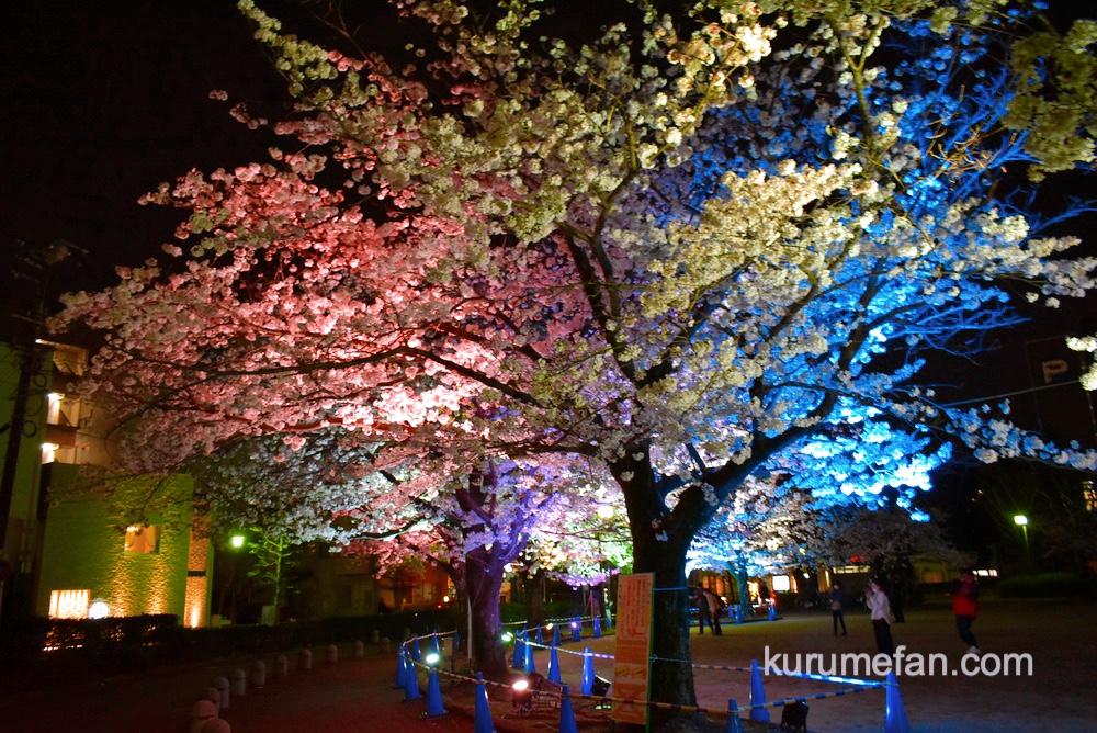 文化街桜ライトアップ 開催場所【三本松公園 久留米市日吉町4】