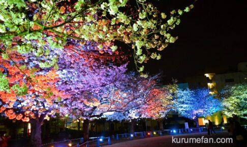 久留米市 三本松公園の桜がライトアップされ幻想的!文化街桜ライトアップ【動画あり】