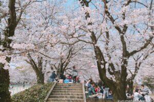 久留米市 今年も公園等での花見に伴う宴会の自粛を呼びかけ【新型コロナ拡大防止】