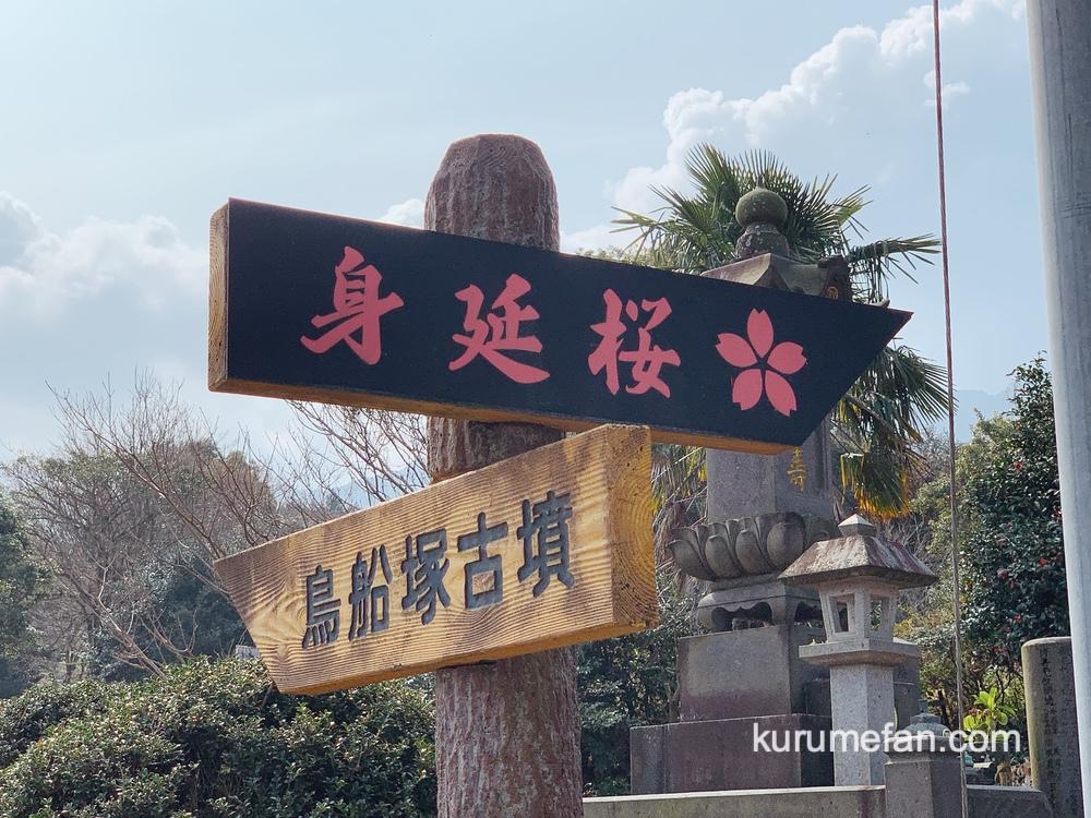 うきは市 法華原華庭園「身延のしだれ桜」誘導看板