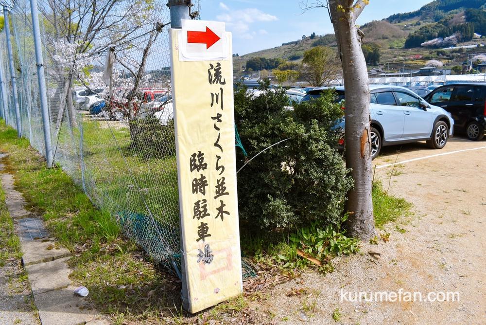 流川(ながれかわ)の桜並木 臨時駐車場