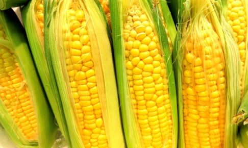 まちプリ 久留米市から中継 おいしいトウモロコシを食べまくる!