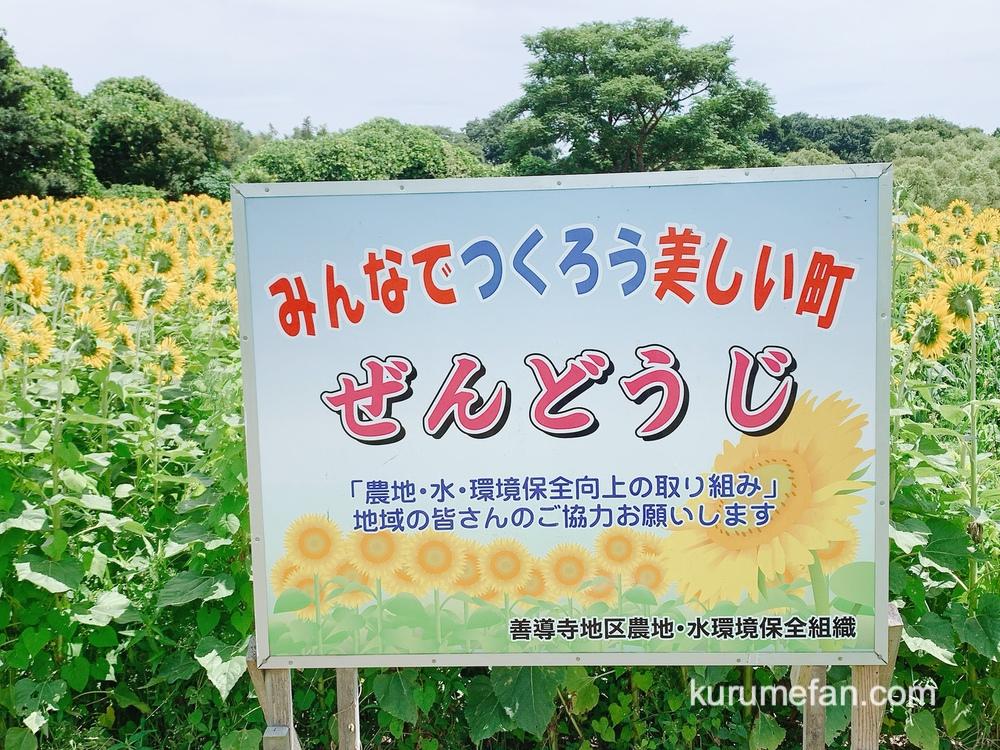 「ひまわり畑」の側に『善導寺地区・水環境保全組織』看板が設置