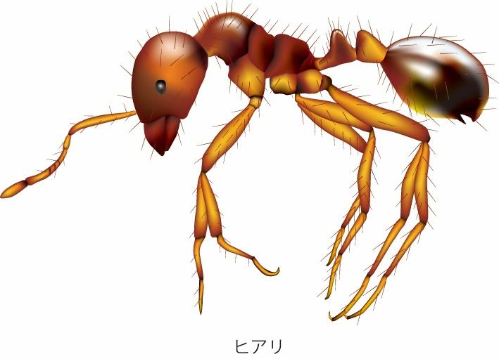 鳥栖市内でヒアリが発見される 特定外来生物 佐賀県初確認
