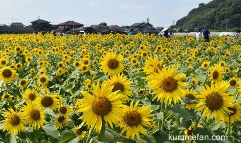 道の駅原鶴 ひまわりが綺麗!黄色い絨毯のような絶景【朝倉市】