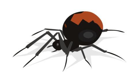 久留米市諏訪野町でセアカゴケグモが50匹発見される 注意を呼びかけ