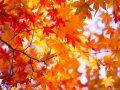 筑前秋月紅葉まつり&秋の恵み大収穫祭2018 グルメや縁日が出店