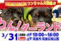 福岡最大規模のペットフェス「わん!ダーランド」筑後広域公園にて開催
