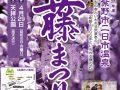 筑紫野市祭「二日市温泉 藤まつり」樹齢1300年の大藤 武蔵寺