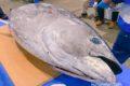 久留米市  市場祭り2019へ行ってきた!マグロの解体、新鮮な魚が美味い!