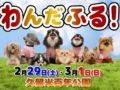 わんだふる!春の久留米開催 九州最大規模のペットフェス【2020年】
