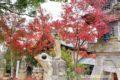 かえる寺(如意輪寺)の紅葉を見てきた!境内の美しい紅葉【小郡市】
